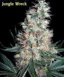 Jungle Wreck Reg seeds