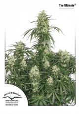 The Ultimate feminised (5-1000 seeds) ― GrowSeeds